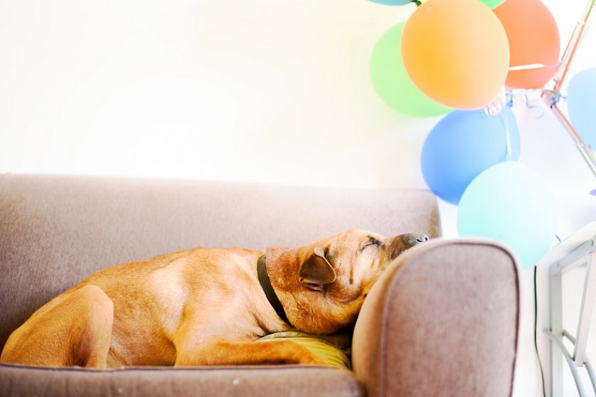Miego ciklai – kokią įtaką jie daro mūsų poilsiui?
