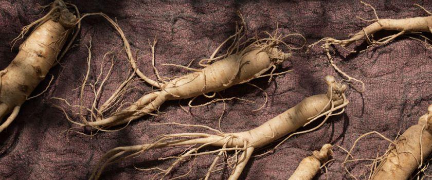 Augalo šaknis padėsianti įveikti nuovargį